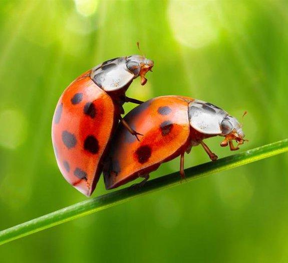 Conheça detalhes íntimos do curioso mundo da reprodução animal