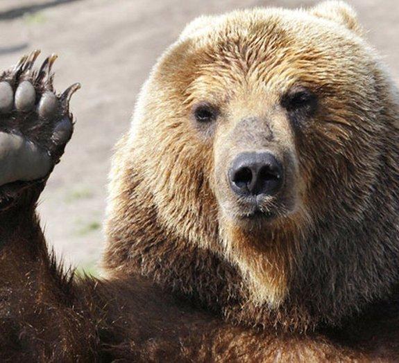 Conheça a história do urso que foi membro oficial do exército polonês