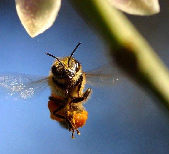20 fatos curiosos sobre as abelhas