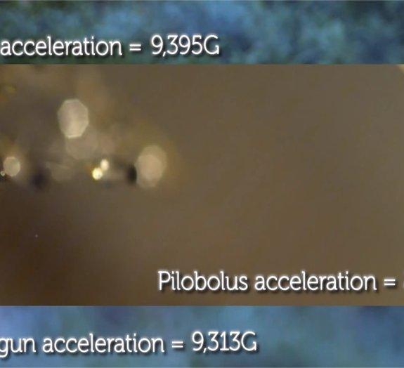 Você sabe qual é a coisa com a maior aceleração do planeta?