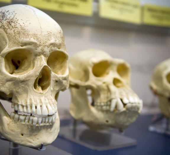 8 fatos que você ainda não sabia sobre a evolução humana