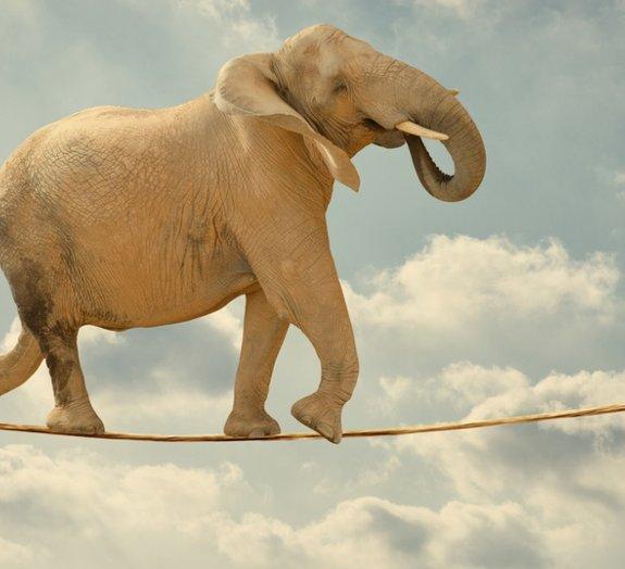 Quantas formigas seriam necessárias para levantar um elefante?