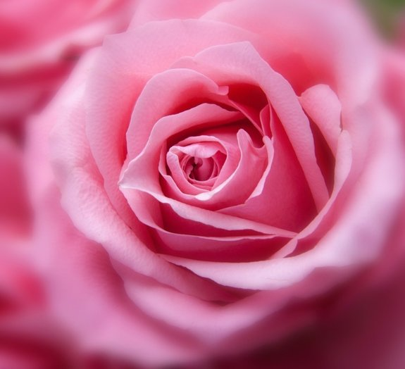 Você sabia que, cientificamente, a cor rosa não existe?