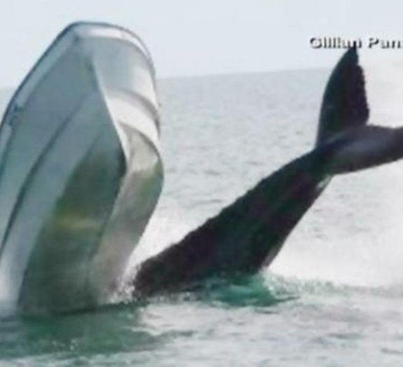 Turista fotografa baleia derrubando barco de pesca