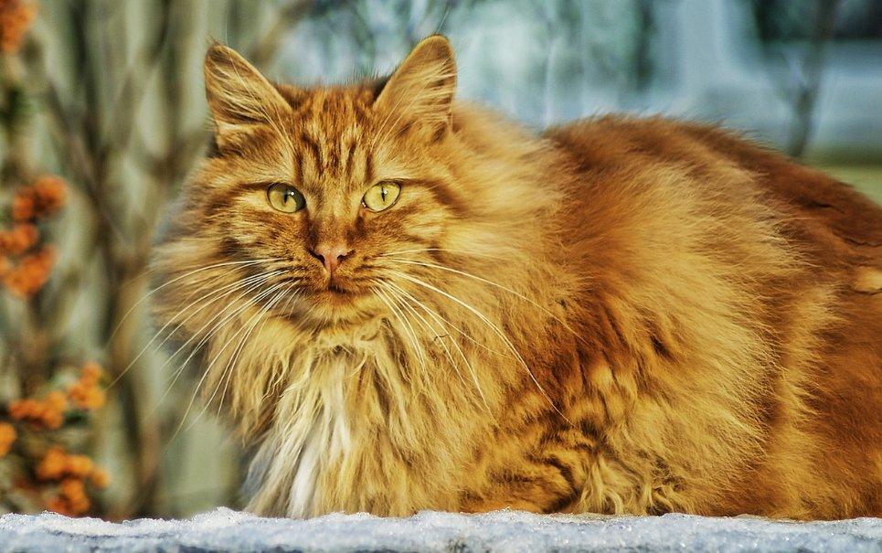 O que aconteceria se todos os gatos do mundo desaparecessem?