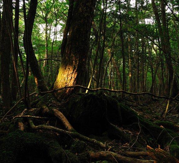 Bem-vindo a Aokigahara, a floresta da morte