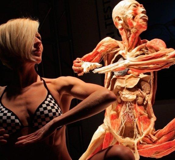 Quanto seu corpo produz de suor, urina, saliva e fezes ao longo do ano?