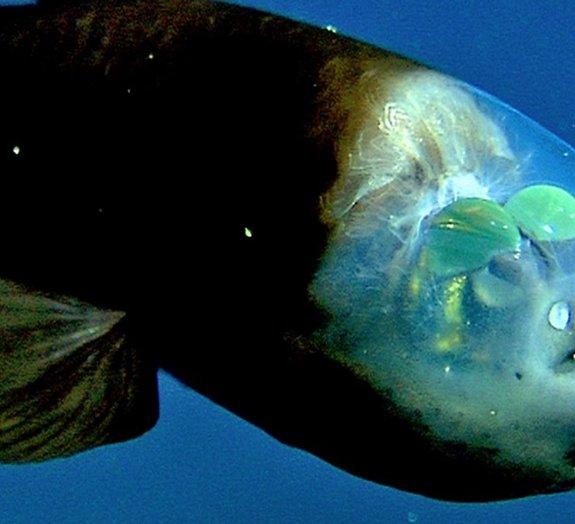 Conheça 5 criaturas bizarras que habitam as profundezas dos oceanos