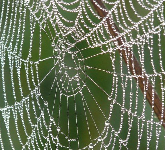 Como é que as aranhas não se enroscam nas próprias teias?