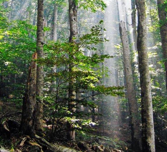 Confira algumas das florestas mais incríveis do mundo
