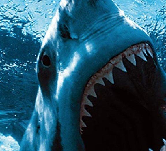 5 bocas aterrorizantes do mundo animal
