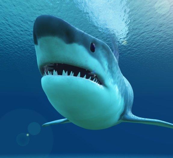Conheça alguns fatos curiosos sobre os tubarões
