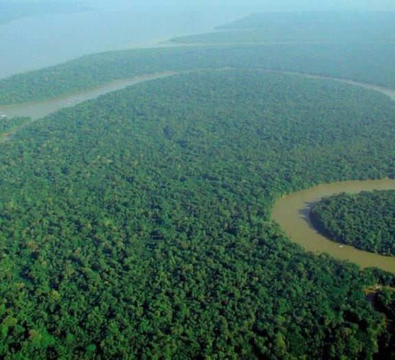 4 criaturas sinistras que vivem no Rio Amazonas