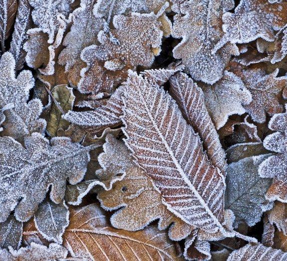 Como os insetos se adaptam para sobreviver ao inverno?