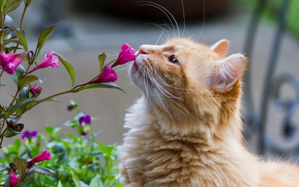 17 curiosidades que você talvez não saiba sobre os sentidos dos animais