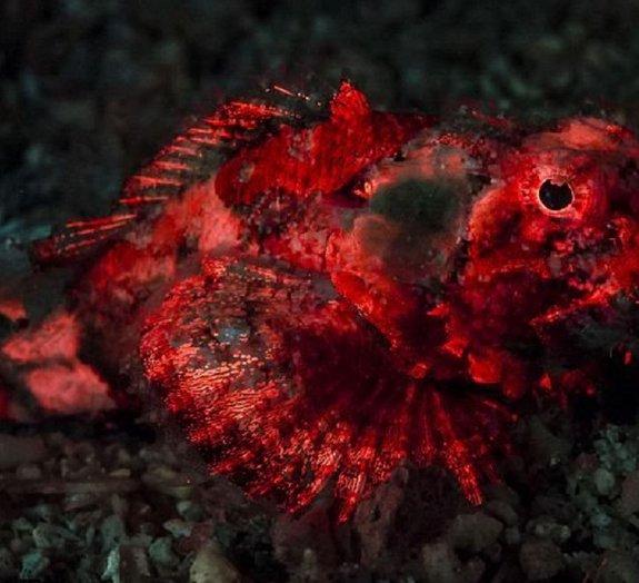 Fotografia: técnica especial captura vida marinha em cores fluorescentes