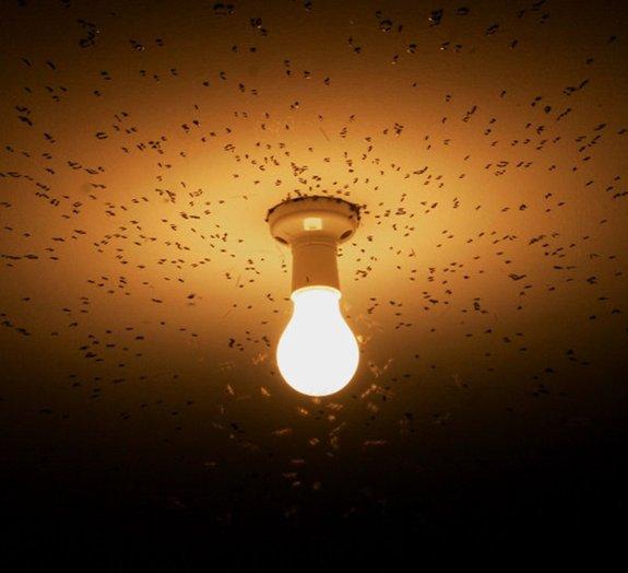 Você sabe por que, no calor, os insetos voam ao redor da luz elétrica?