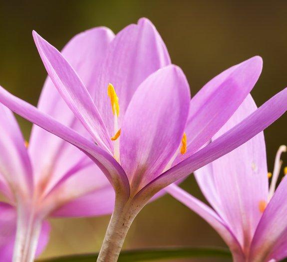 7 flores bonitas, mas terrivelmente tóxicas e até fatais