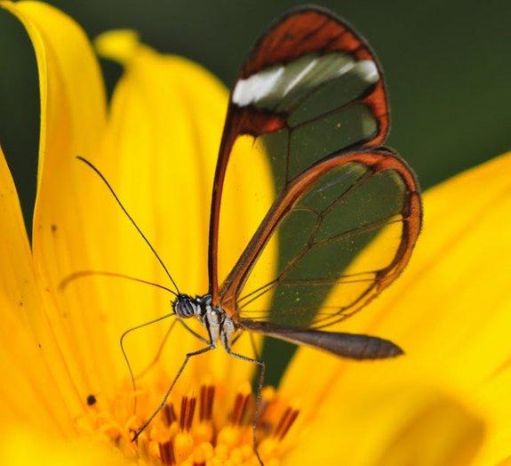 Surpreenda-se com a beleza exótica de 14 animais transparentes
