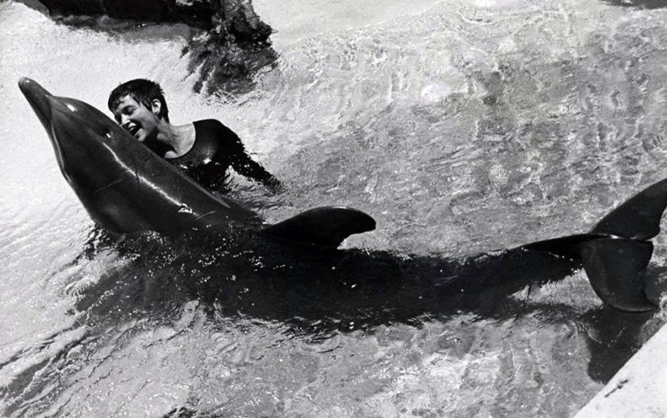 Drogas, sexo e suicídio: a história de amor entre uma mulher e um golfinho