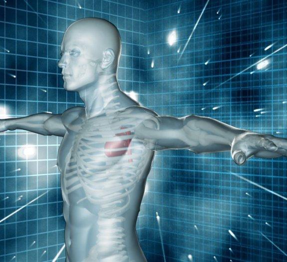 É verdade que as células do corpo humano se renovam a cada 7 anos?
