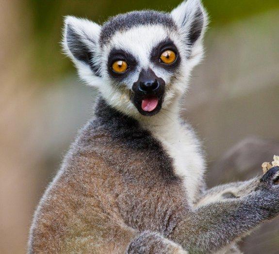 Próxima Parada: Madagascar - encante-se com uma das maiores ilhas do mundo