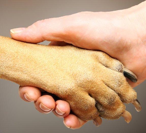 18 fatos que você não sabia sobre a pata do seu cachorro