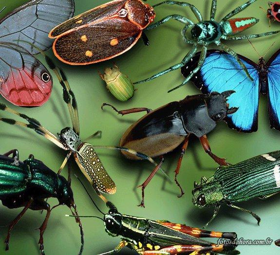 Por que insetos, aranhas e escorpiões gigantes não existem?
