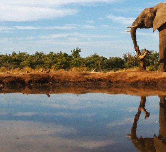 10 coisas que elefantes e humanos têm em comum