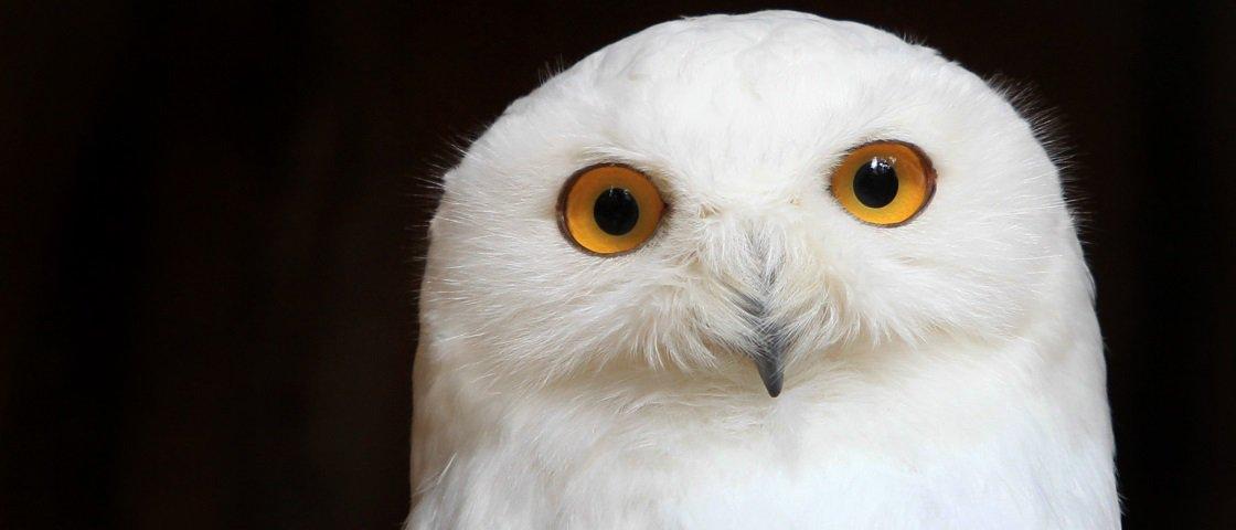 5 fatos interessantes sobre corujas