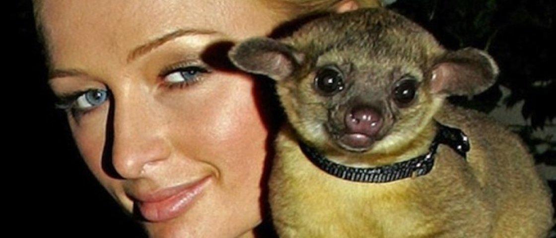 20 animais estranhos que serviram como pets para os famosos