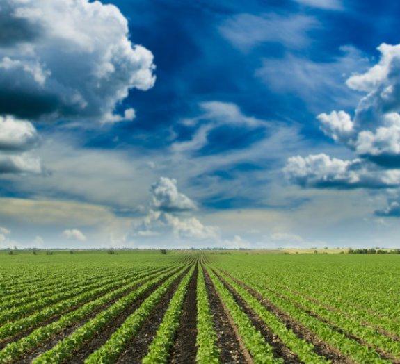Sabia que o surgimento da agricultura quase causou o colapso da humanidade?