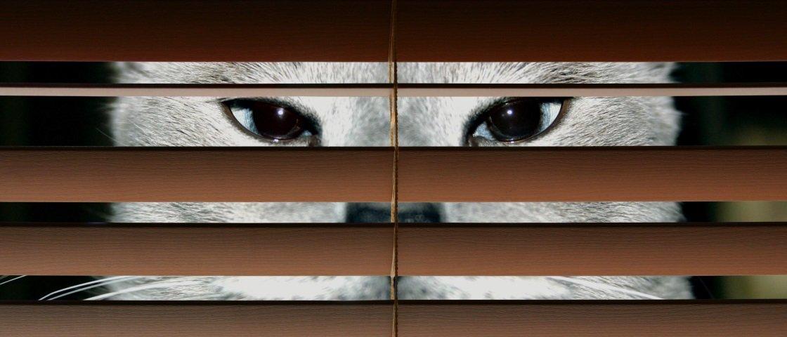 Você já ouviu falar de animais espiões e que trabalham para o exército?