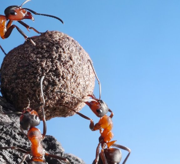 De acordo com estudo, formigas convertem dióxido de carbono em minerais