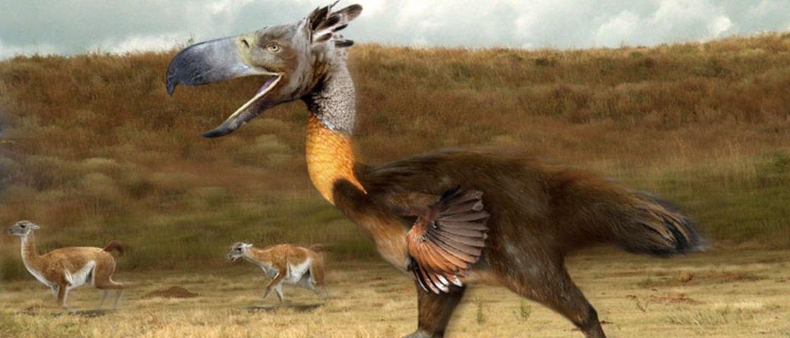 9 pássaros enormes que foram extintos