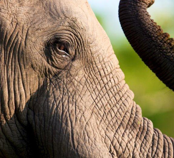 """Elefantes dão """"corridão"""" em motoqueiro na estrada [vídeo]"""