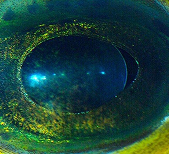 Incrível: olhos de animais parecem planetas alienígenas
