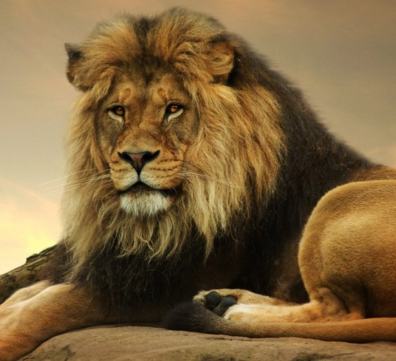 Você conhece o conceito de repovoamento com animais selvagens?