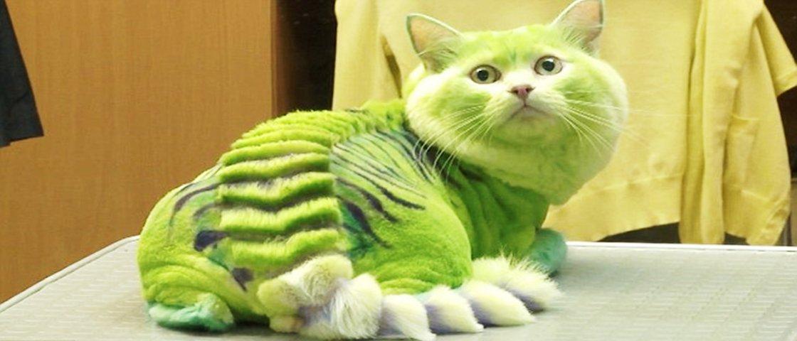 Loucura: nova moda na Rússia transforma gatos em dragões e cães em abelhas