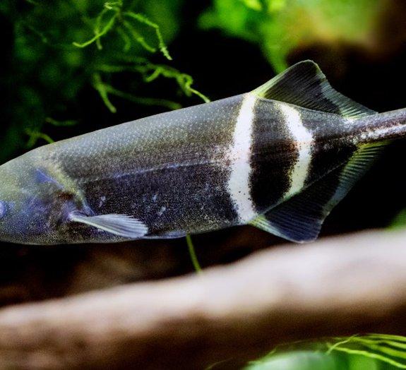 Conheça 8 peixes com habilidades curiosas