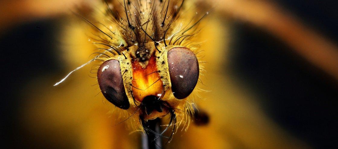 Estas imagens macroscópicas vão mudar a forma como você vê alguns bichos