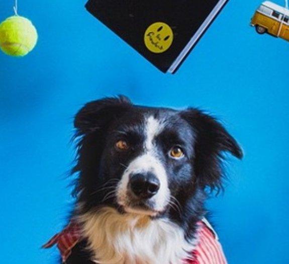 Procurando Momo: fotógrafo faz ensaio divertido com seu cachorro