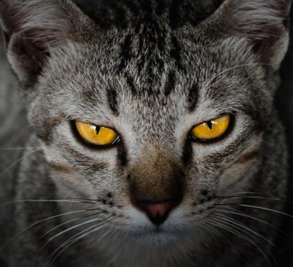 Para a Ciência, gatos são animais frios, insensíveis e não amam você