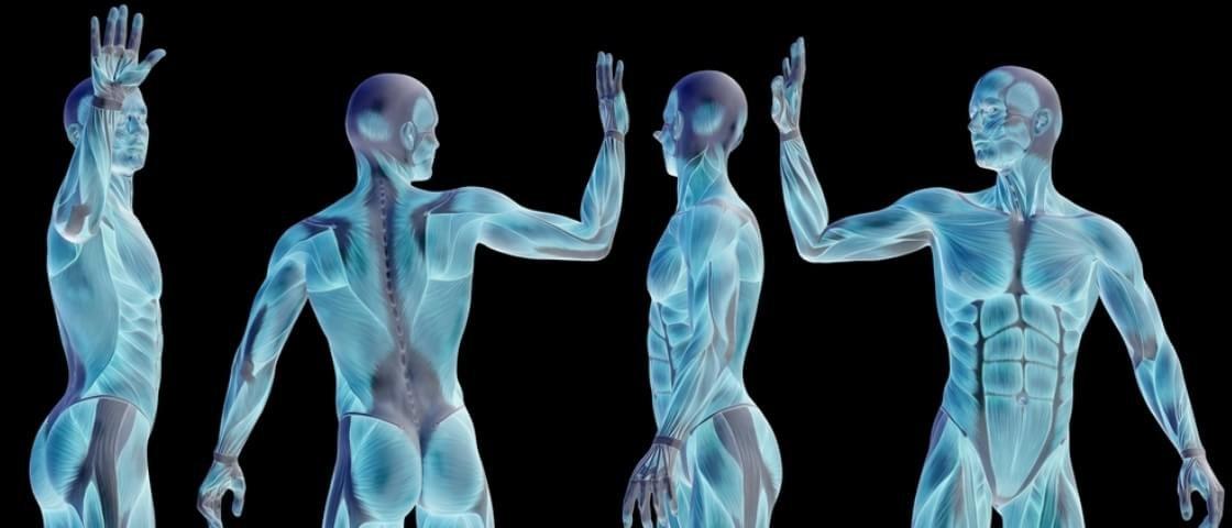 Aula de anatomia: aprenda 15 fatos impressionantes sobre o corpo humano