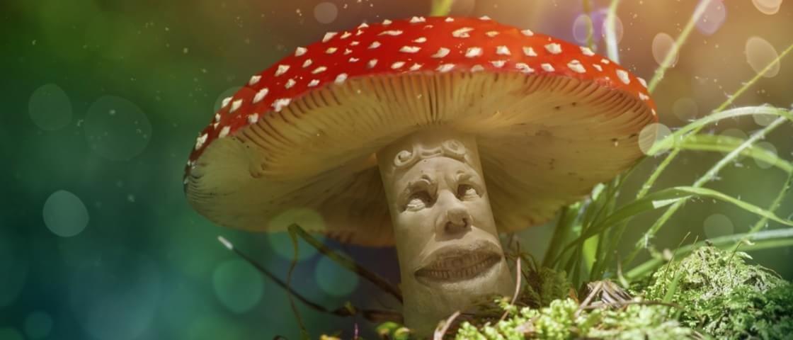 Que viagem! Confira 10 fatos alucinantes sobre chá de cogumelo