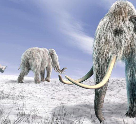 Cientistas sul-coreanos querem clonar mamute de 40 mil anos de idade