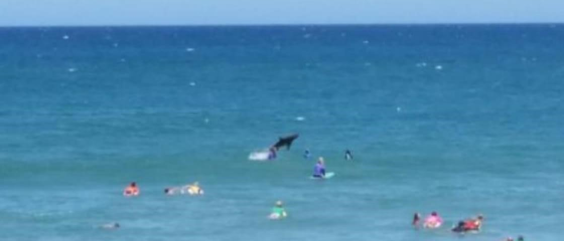 Tubarão salta no meio de banhistas e interrompe competição de surf