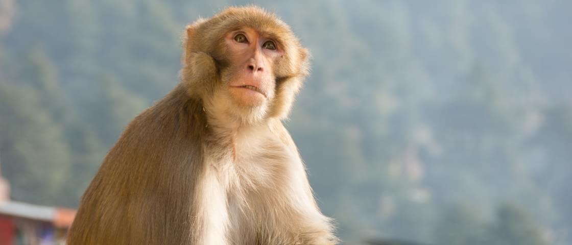 Macaco salva seu amigo eletrocutado em uma estação de trem na Índia [vídeo]