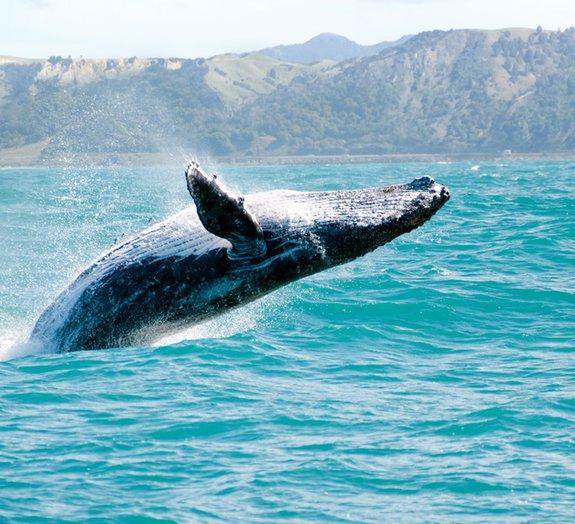 8 fatos estranhos e surpreendentes sobre as baleias