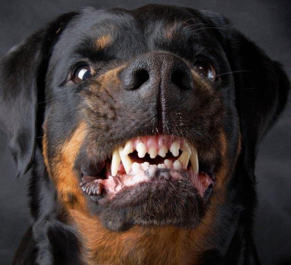 E agora: como se defender de um cão feroz?